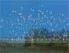 秦皇岛家庭旅游,秦皇岛亲子游,秦皇岛亲子游攻略,秦皇岛全家总动员旅游,秦皇岛孝敬父母游