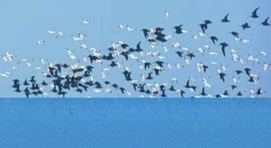 北戴河观鸟