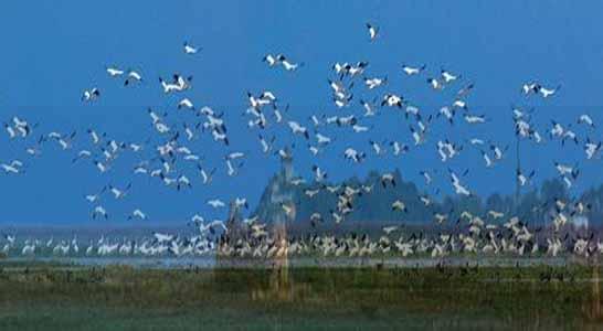 秦皇岛观鸟湿地