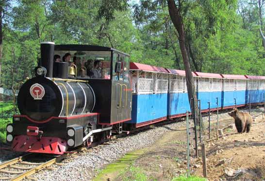 北戴河野生动物园门票多少钱—小火车:孩子最喜欢